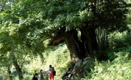 Bosque Liébana