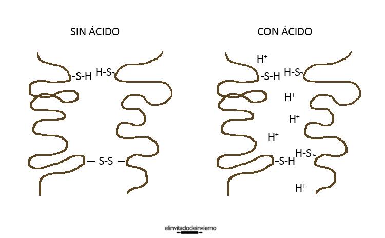 enlaces proteinas